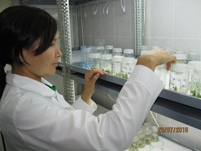Лаборатория клонального размножения